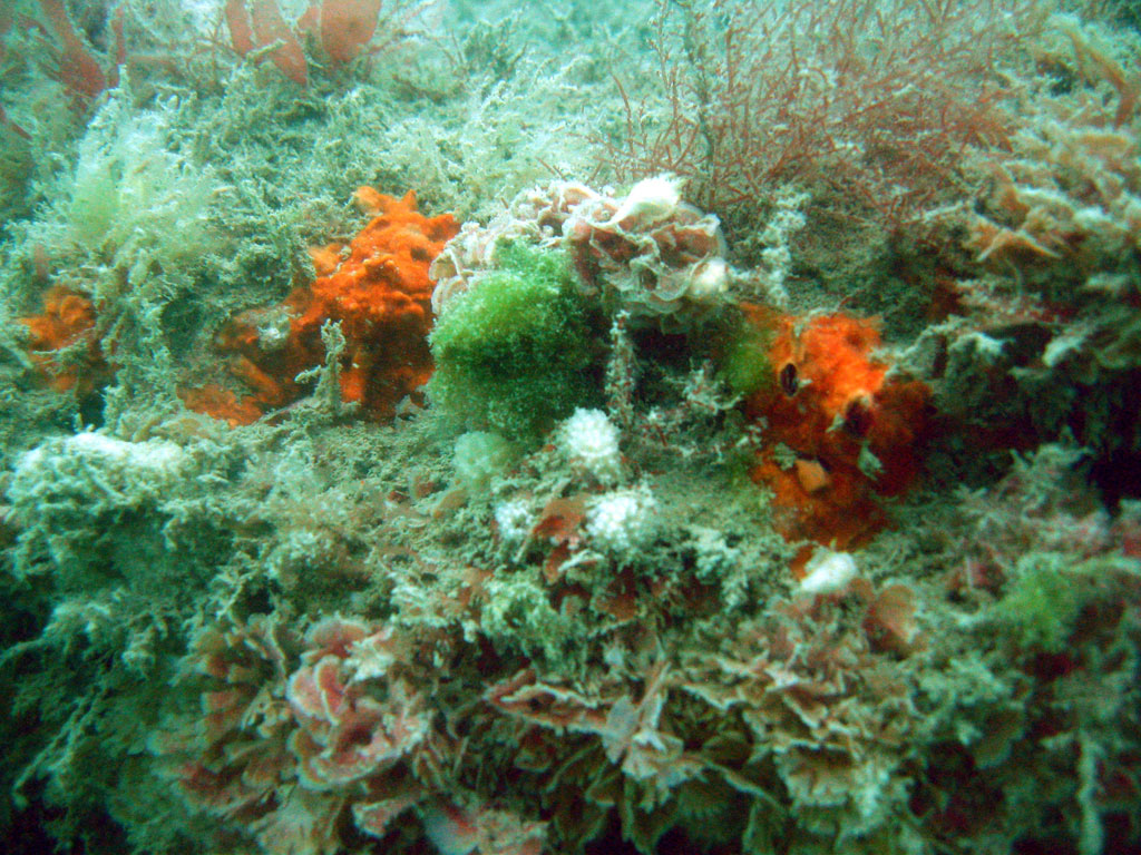 Section of Chalk Reef off Brighton